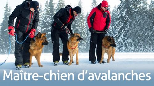 Métiers Pisteur maitre chien d'avalanche