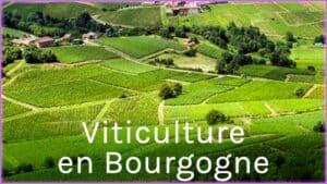 Les métiers des climats de Bourgogne